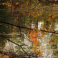 Fall River Branches by LeeAnn McLaneGoetz McLaneGoetzStudioLLCcom