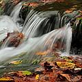 Fall Rush by Bryan Noll