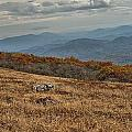 Fall Scene On Whitetop Mountain Va by Mel Hensley