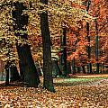Fall Scenery by Hannes Cmarits
