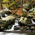 Fall Stream by Darren Fisher