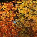 Fall Textures In Water by LeeAnn McLaneGoetz McLaneGoetzStudioLLCcom