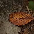 Fall Textures by Maria Suhr
