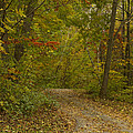 Fall Trail Scene 22 by John Brueske