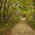 Fall Trail Scene 23 by John Brueske
