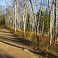 Fall Trail Scene 35 A by John Brueske