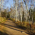 Fall Trail Scene 35 B by John Brueske