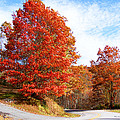 Fall Tree By The Road by Duane McCullough