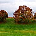 Fall Tree Line by Brenda Conrad