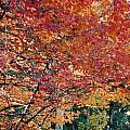 Fall Trees 18 by Debbie Wassmann