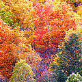 Fall Trees 3 by Duane McCullough