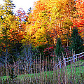 Fall Trees And Fence by Duane McCullough