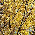 Fall Trees Art Prints Yellow Autumn Leaves by Baslee Troutman