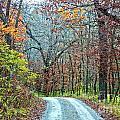 Fall Trees by Carolyn Fox