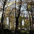Fall Trees by Dottie Gillespie
