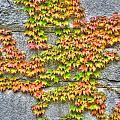 Fall Wall by Michael Frank Jr
