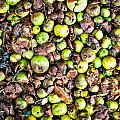 Fallen Apples by Tom Gowanlock