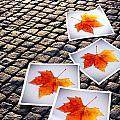 Fallen Autumn  Prints by Carlos Caetano