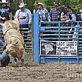 Fallen Cowboy by Sean Griffin