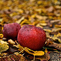 Fallen Fruit by Susan Herber