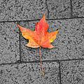 Fallen Leaf  by Brittany Horton