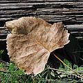 Fallen Leaf by Grace Grogan