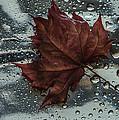 Fallen Leaf by Vladimir Kholostykh