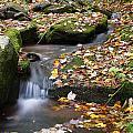 Fallen Leaves by Jeff Bord