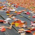 Fallen Leaves by Lisa Phillips