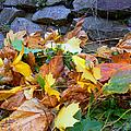 Fallen Leaves  by Pamela Patch