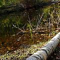 Fallen Tree Path by LeeAnn McLaneGoetz McLaneGoetzStudioLLCcom