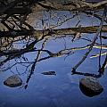 Fallen Tree Trunk With Reflections On The Muskegon Rive by Randall Nyhof