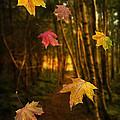 Falling Leaves by Amanda Elwell