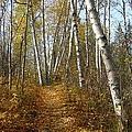 Falling Leaves by Jim Sauchyn