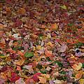 Falling Leaves by Trish Tritz