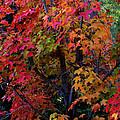 Falls Fiery Rainbow by Jim Robbins