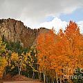 Fall's Glory by Ellen Heaverlo