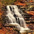 Falls In The Woods by Adam Jewell