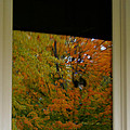 Fall's Reflective Moment by Susan Herber