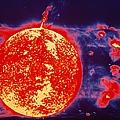 False-color Skylab Image Of A Solar by NASA / Science Source