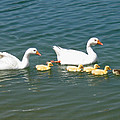 Family Outing On The Lake by Ed Churchill