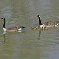 Family Swim by Guy Ricketts