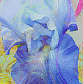 Fanciful Flowers - Iris by Regina Geoghan