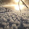 Fanciful Frosty Fractal Forest by Kent Lorentzen