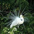 Fancy Feathers by Sabrina L Ryan