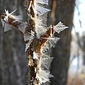 Fancy Fractal Frost Crystals by Kent Lorentzen