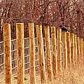 Farm Fence And Birds by Jiayin Ma