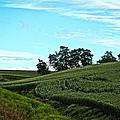 Farm Fields by Steve McKinzie