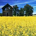 Farm House And Canola Field, Holland by Dave Reede