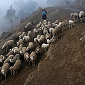 farmers bring their sheep to graze. Republic of Bolivia. by Eric Bauer